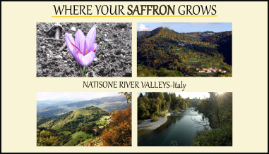 Where Oro del Natisone Saffron grows